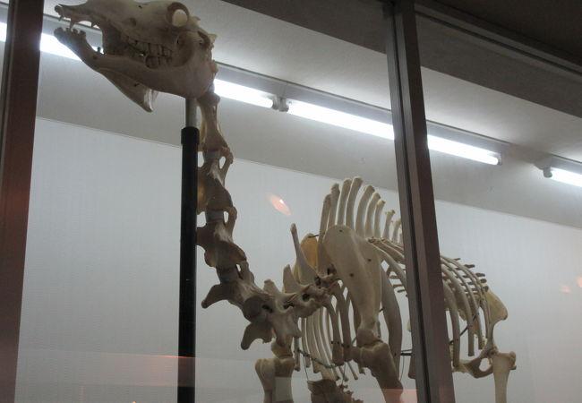 旭川市旭山動物園 動物資料展示館