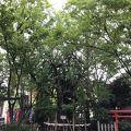 写真:稲毛神社 御神木大銀杏と十二支めぐり