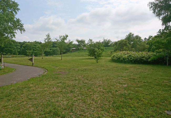 北海道立自然公園 野幌森林公園