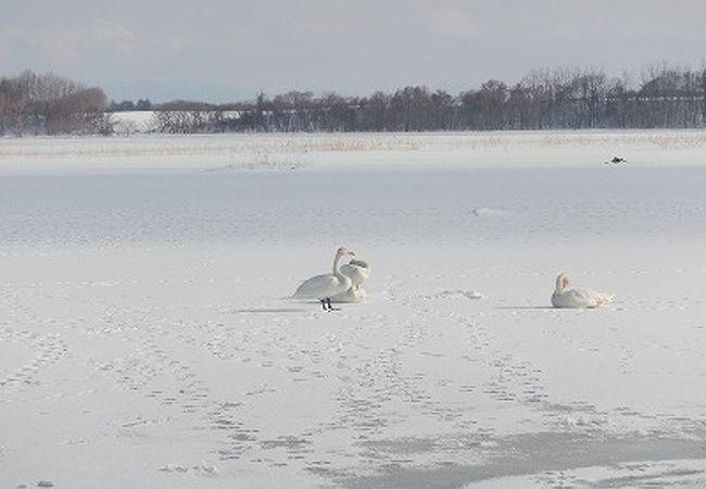 濤沸湖 (白鳥公園)
