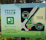 グランツリー武蔵小杉