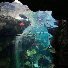 ひと水槽あたりの魚の個体数が他の水族館より多い気がします。