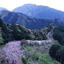 みやまの里森林公園