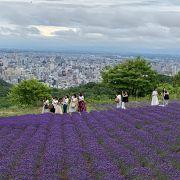 穴場的な札幌のラベンダー畑
