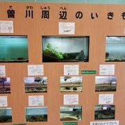 木曽川を中心にした自然を学ぶ