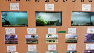 木曽川水園 (河川環境楽園)
