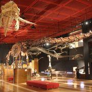 恐竜の化石や模擬坑道などがあります
