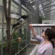 こんな感じで自由に鳥と触れ合えます。