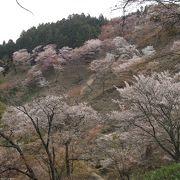 吉野の千本桜