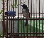 バード ガーデン (雀鳥花園)