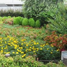 歌碑の裏は花壇になっています