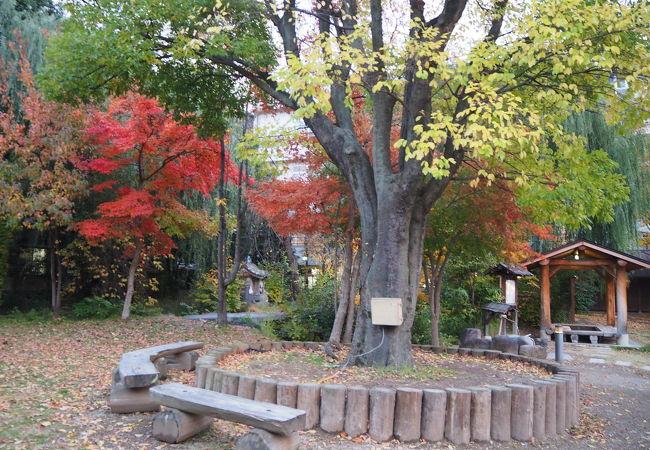 温泉街の公園 水と緑と潤いのある公園