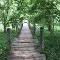 写真:釧路湿原遊歩道