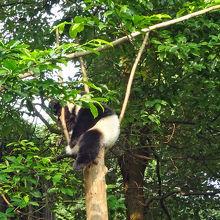 成都名物、パンダのなる木です!!