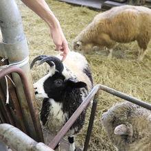 世界の羊が見られます
