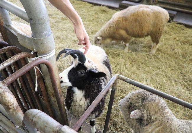 羊と雲の丘世界のめん羊館