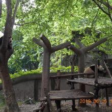 自然の中に大勢のパンダがいます