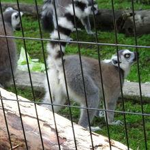 旭川市旭山動物園 サル舎