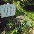 写真:江島神社 奥津宮 力石