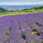 天空のラベンダー畑は札幌の穴場