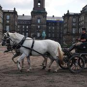 馬のトレーニングを見学