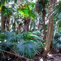 亜熱帯性植物の群落