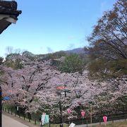 夜桜も「上田城千本桜まつり」