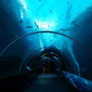 世界最大の水族館