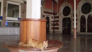 猫が自由なオリエント急行終着駅