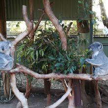 ユーカリを食べるコアラとのんびりするコアラ