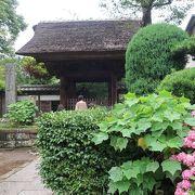 鎌倉の紫陽花名所(3)極楽寺 ♪
