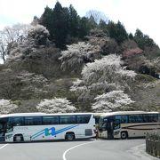 昨年に続いて吉野山