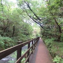 歩いて自然を