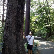 大きな木が日光を遮り暑くないです