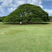 この木何の木に会いに行く。