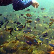 初島第2漁港 フィッシャリーナ 海水浴場のスキンダイビング
