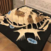 ウミガメの骨