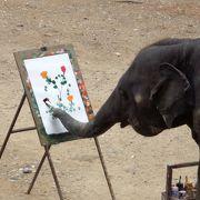 ゾウと本当に触れ合えます。