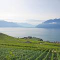 絶景とおいしいワイン
