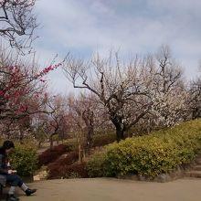 2月頃に満開になる梅の名所として有名