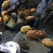 海辺の水族館