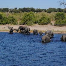 午前中はゲームドライブ、夕方はボートクルーズ 象象象象象象象象象象象象象象象象象象象象象象象象
