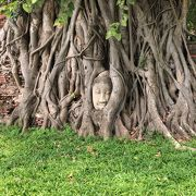 有名な木の根に埋まった仏像!