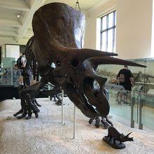 恐竜の化石は迫力がありました