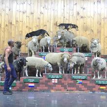 牧羊犬が凄いアクション!!
