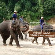 象ショー、象乗り、象と写真と象三昧