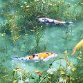 写真:根道神社 (モネの池)