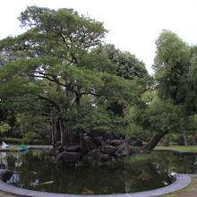 広島城 桜の池跡