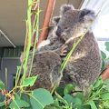 写真:ワイルドライフ シドニー動物園