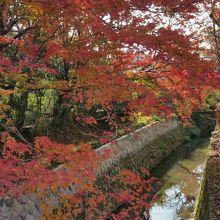 桜も紅葉も素敵です。
